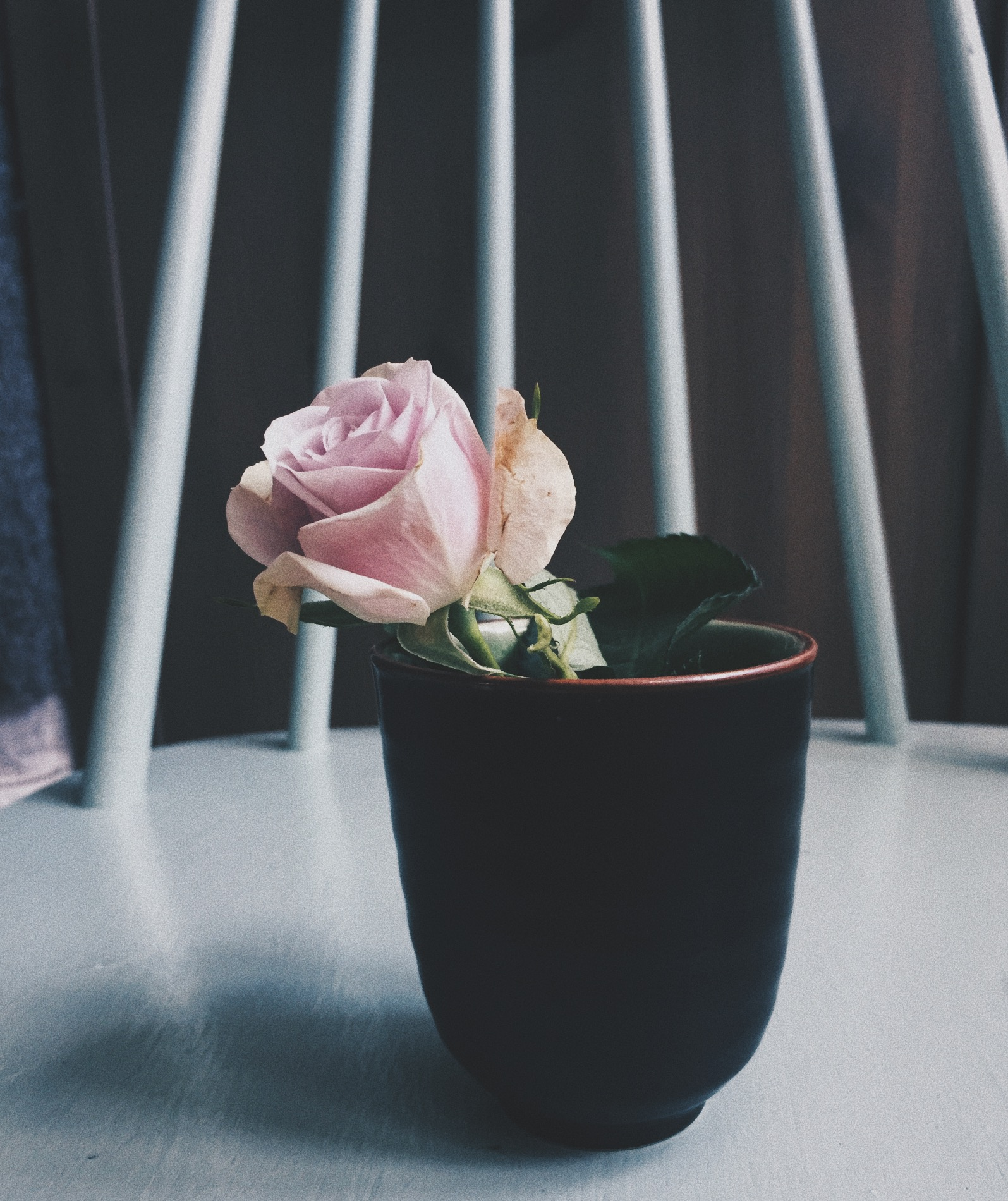 Celebrating the Imperfect-Photos from the archive. Rose in a little vase