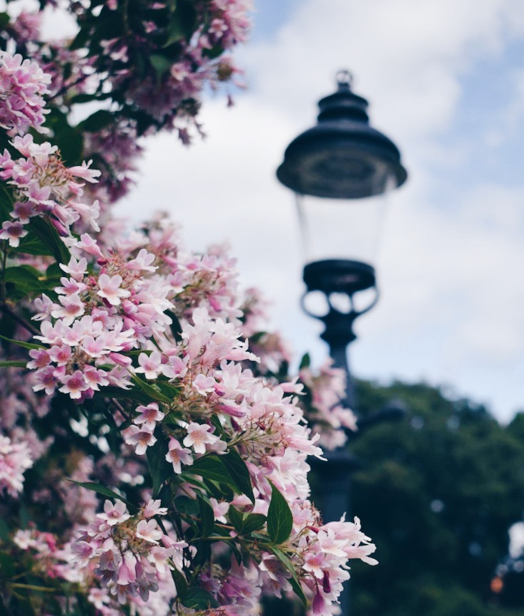 The most instagrammabel spots in Stockholm- flowers and a vintage lamppost