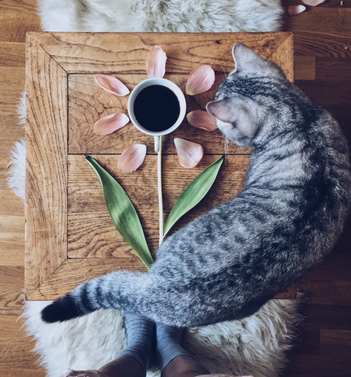 Cat walking around coffee cup and flowers