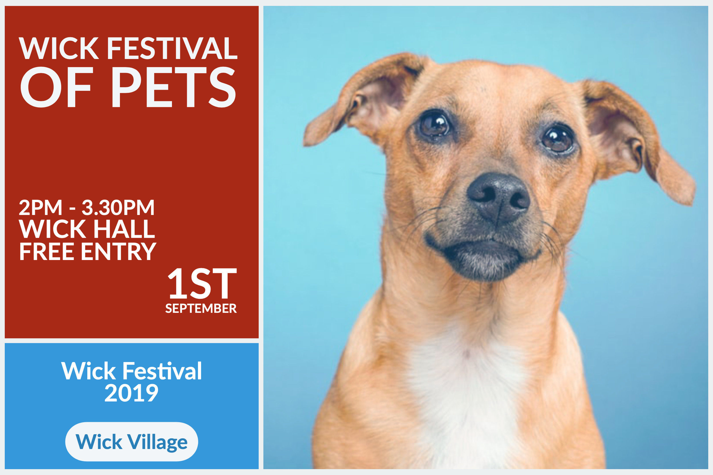 Wick Festival Of Pets - Hosted by Arun Dog Training
