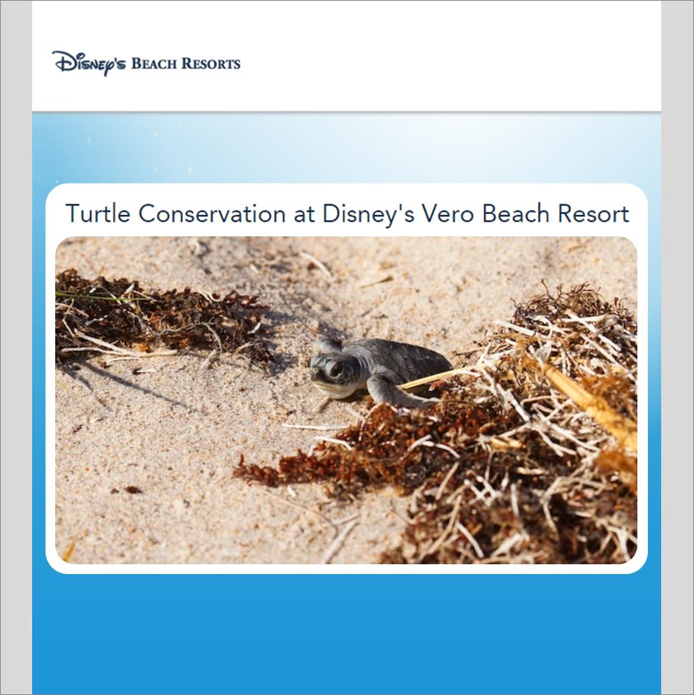 CORPORATE SOCIAL RESPONSIBILITY   Turtle Conservation at  Disney's Vero Beach Resort