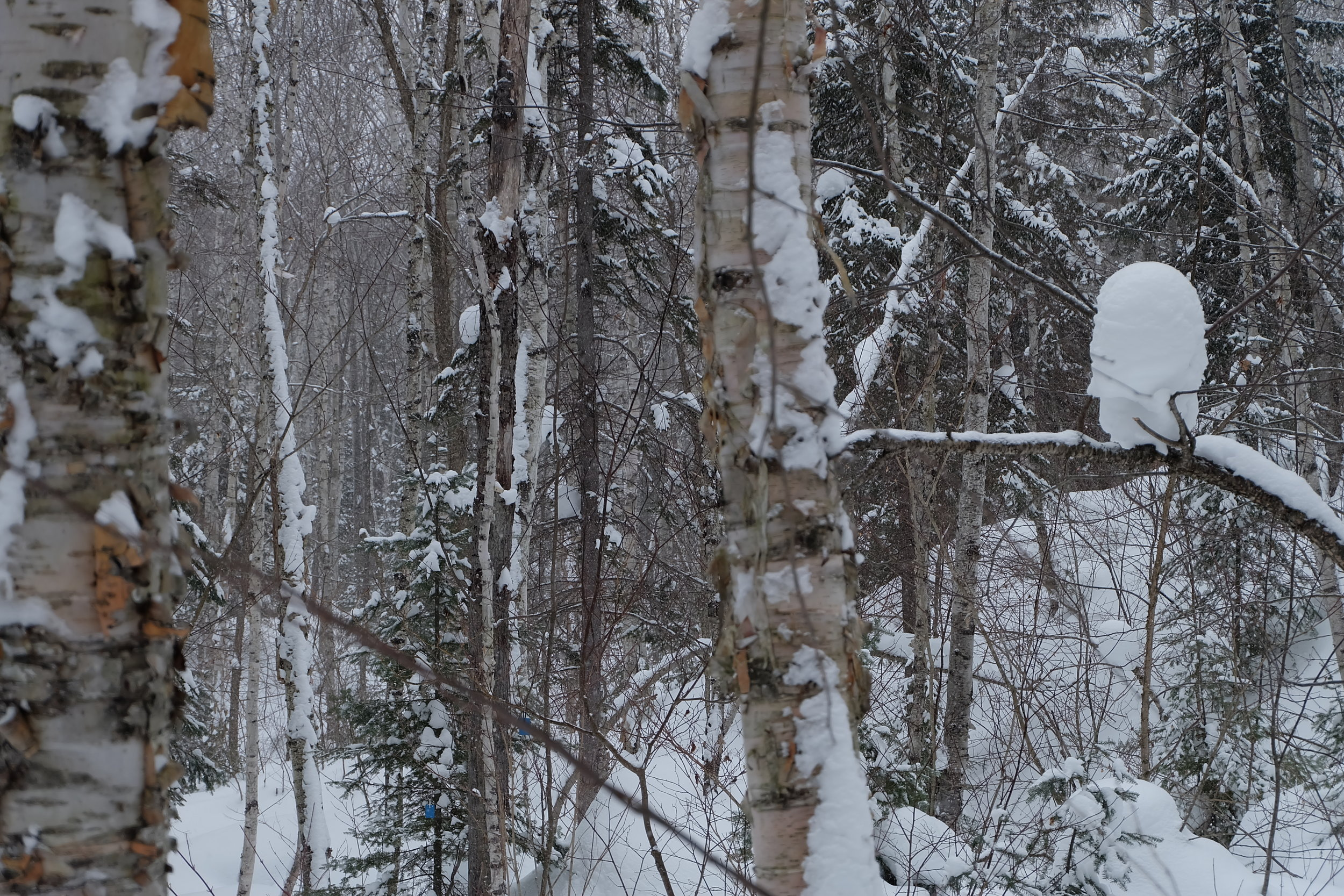 foret-neige-hiver-kekeko