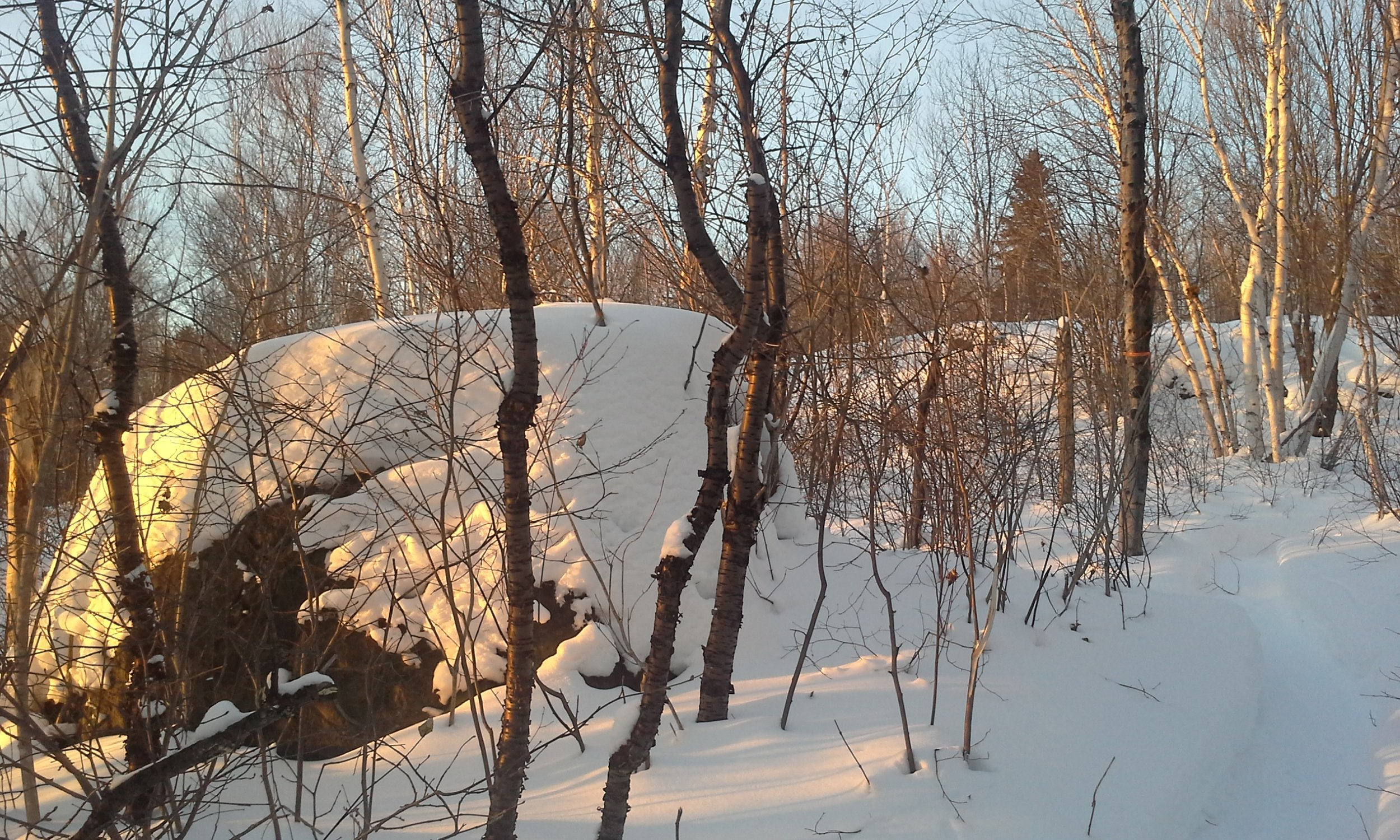 hiver-paysage-abitibi-bois