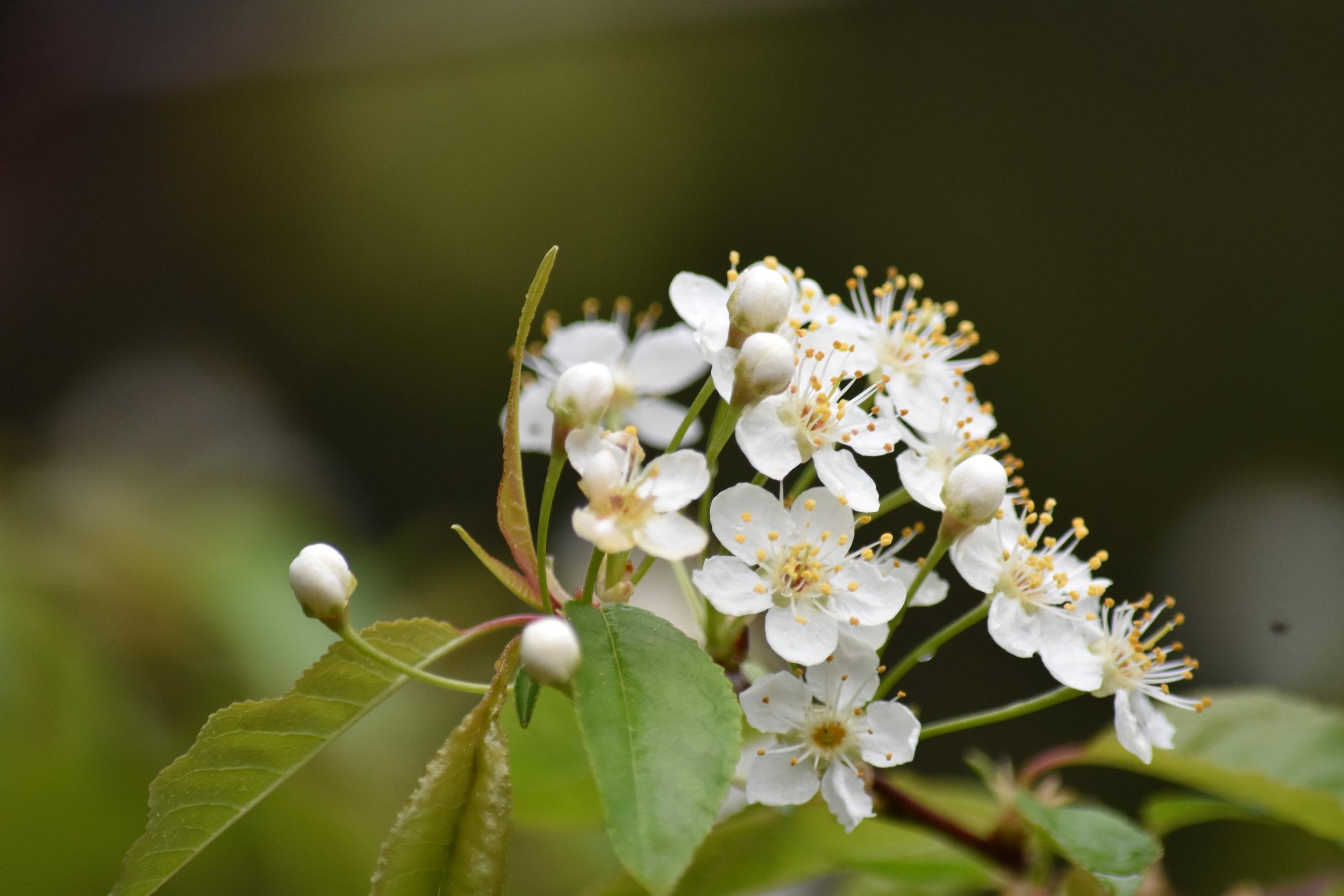 fleures-abitibi-temiscamingue