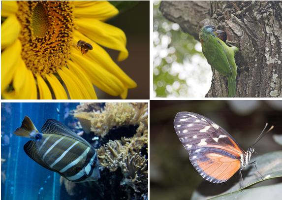 La biodiversité en cadeau - 17 décembre 2010
