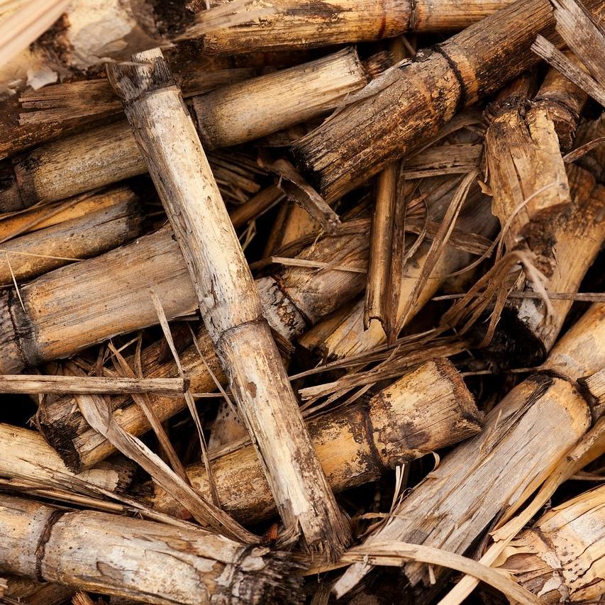 Valoriser la biomasse agricole! - Hiver 2017