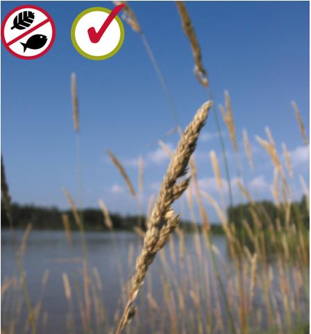 reed carnary grass  Phalaris arundinacea  © Bibiane Racette