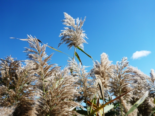 Plantes d'environnements terrestres -