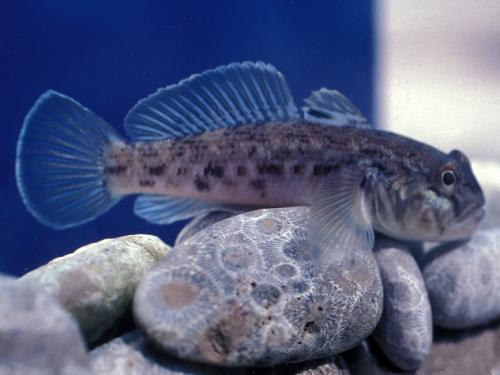 Fish and crustaceans -