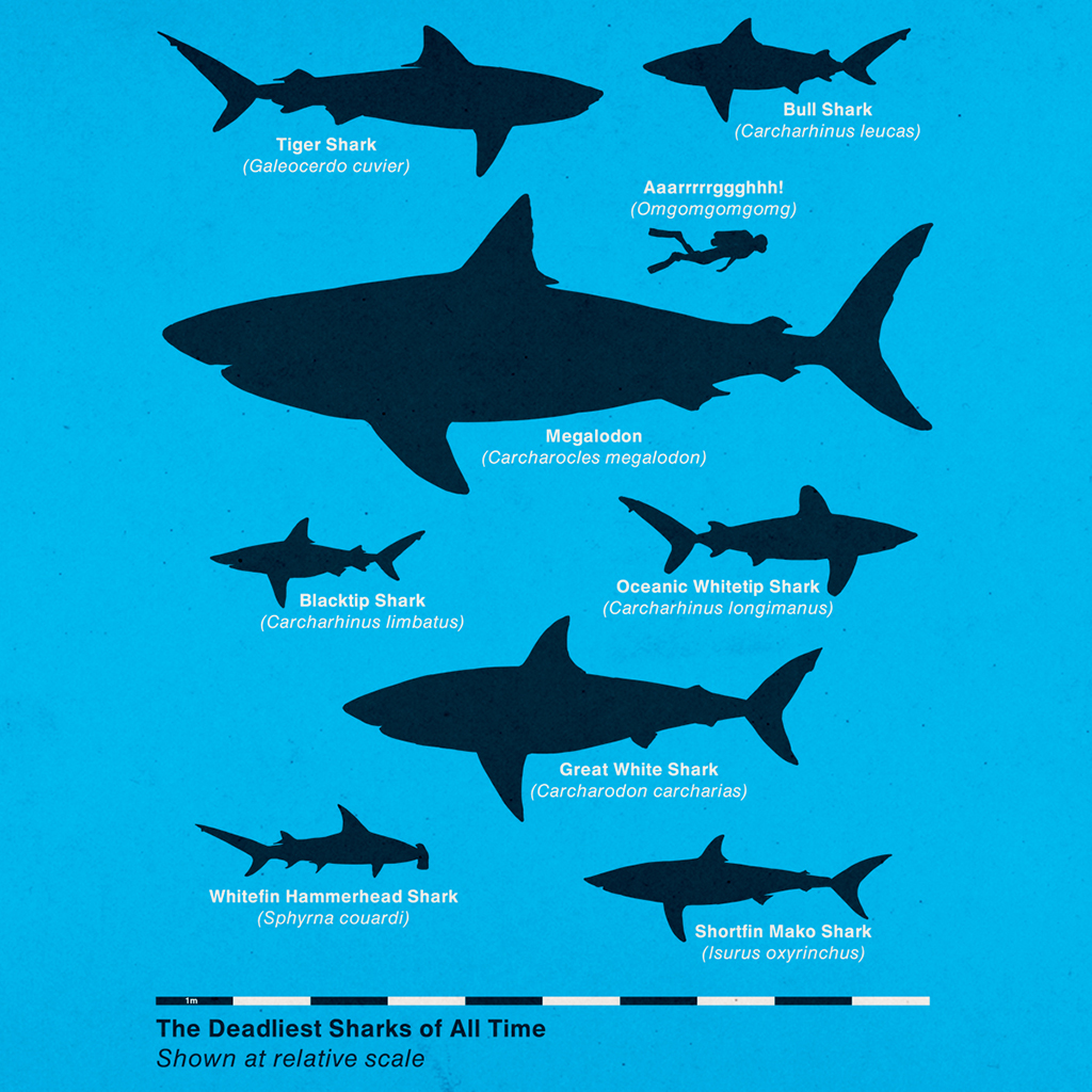 The Deadliest Sharks of All Time -