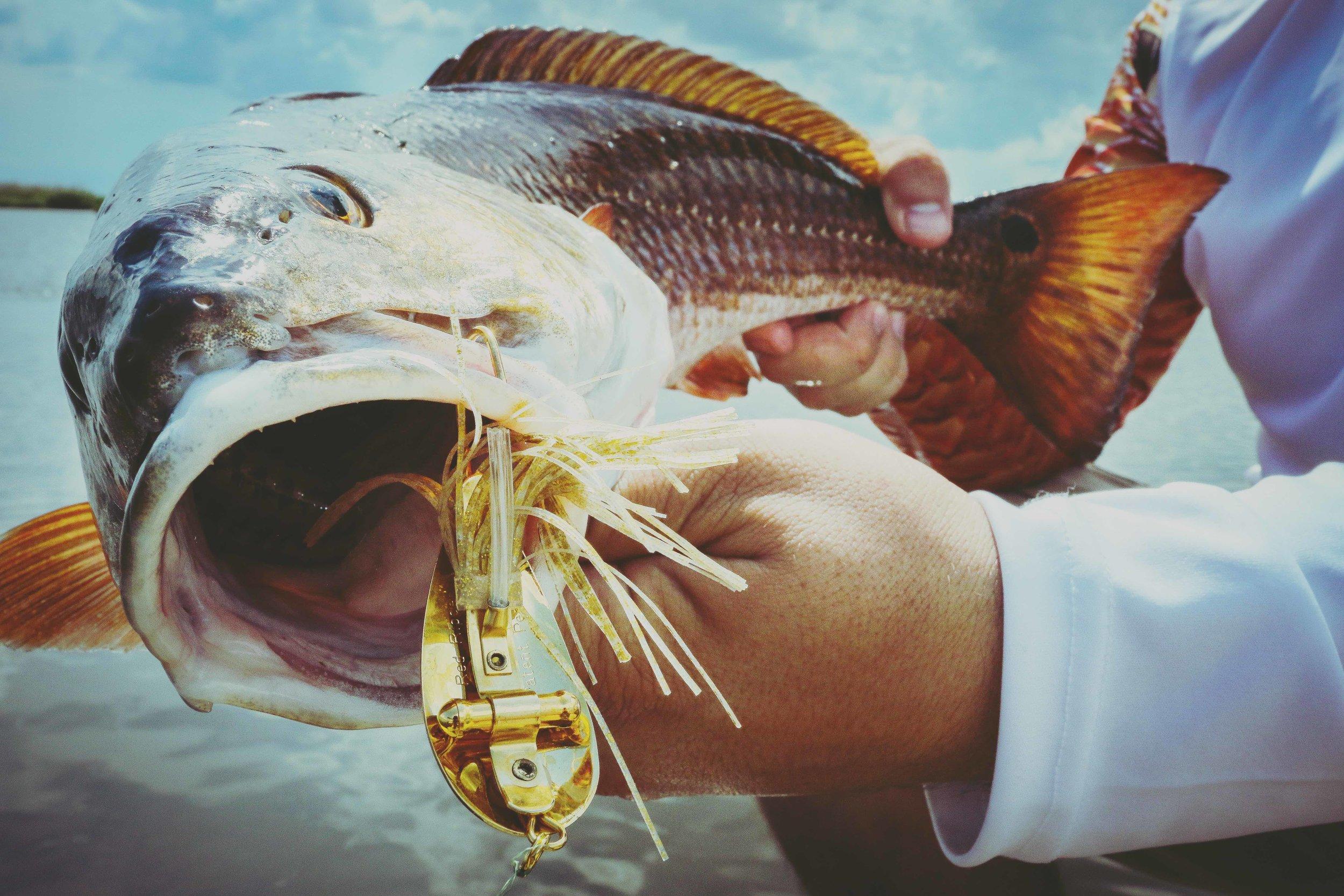 REdfish cover photo.jpg