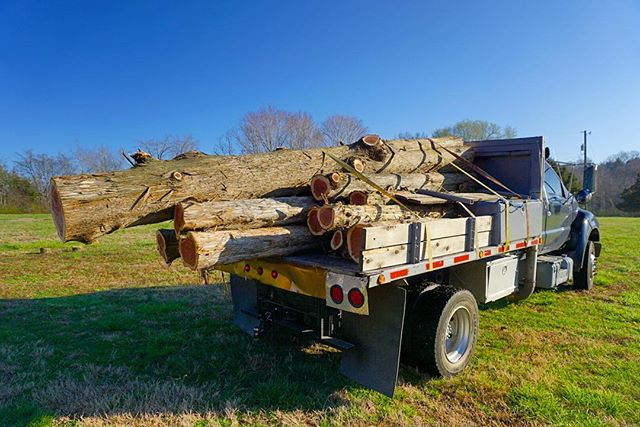 How much cedar fits in your truck bed? #goodpeople #goodwork #chopnashville