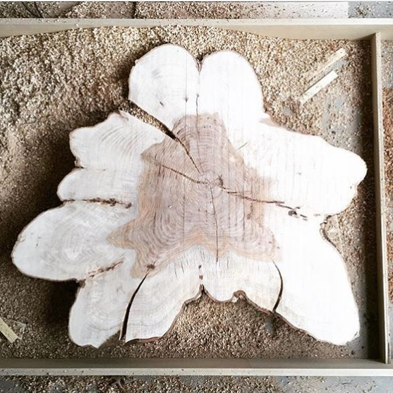 @sow_studio is working on this monster pecan cookie we provided for a collaboration on turning TN trees into useful art. Can't wait to this wearing bow ties and legs. #goodpeople #goodwork #chopnashville
