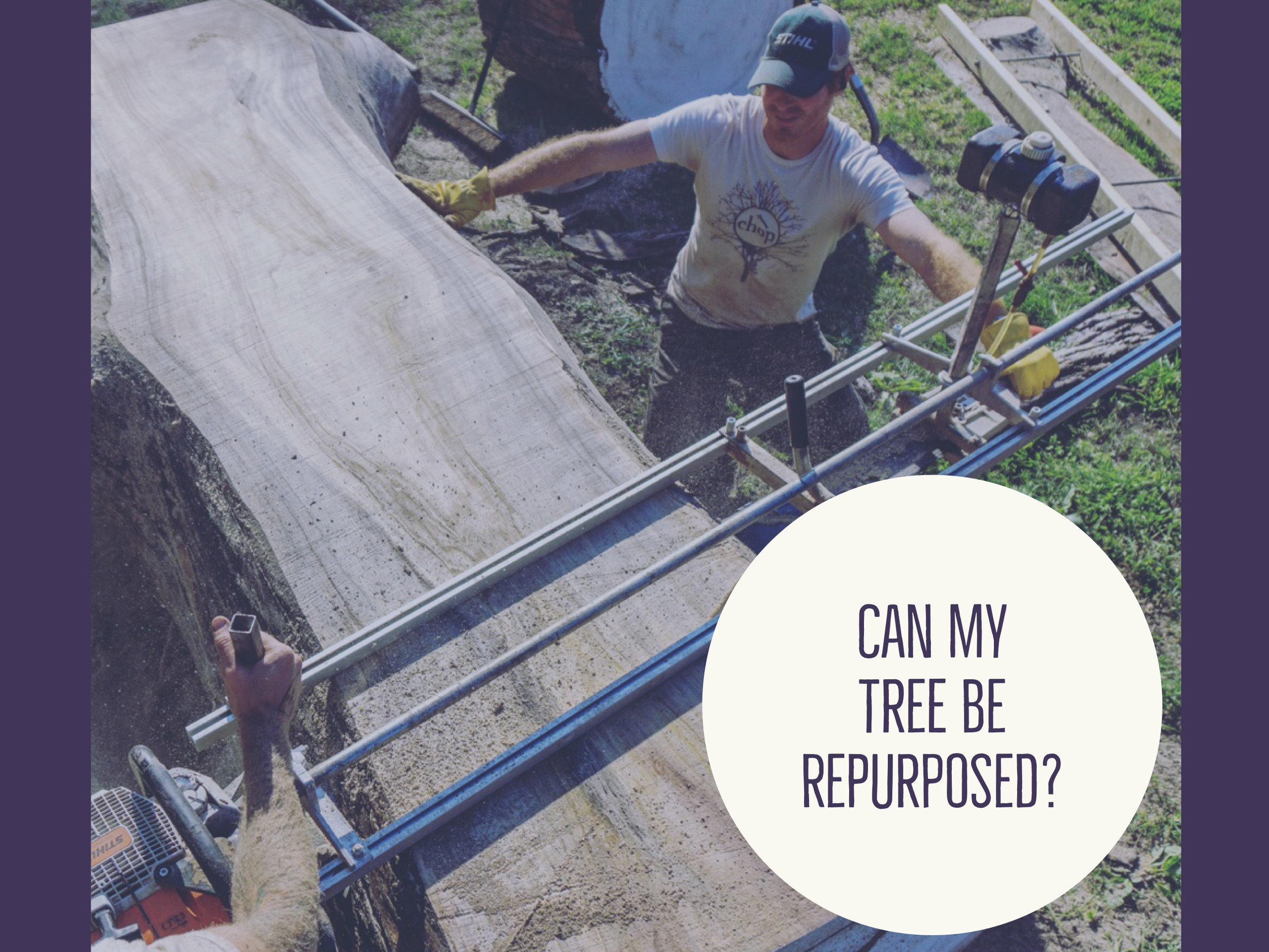 A salvageable tree is - - Almost any size or shape walnut tree- Other hardwoods more than 30 inches in diameter- Mostly straight for 8 feet- Not a Hackberry or Bradford Pear- Free of major decay in trunk