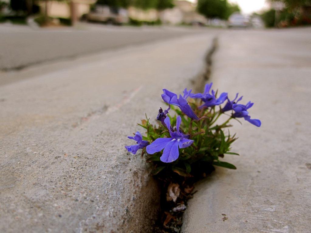 flowers-sidewalk-crack.jpg