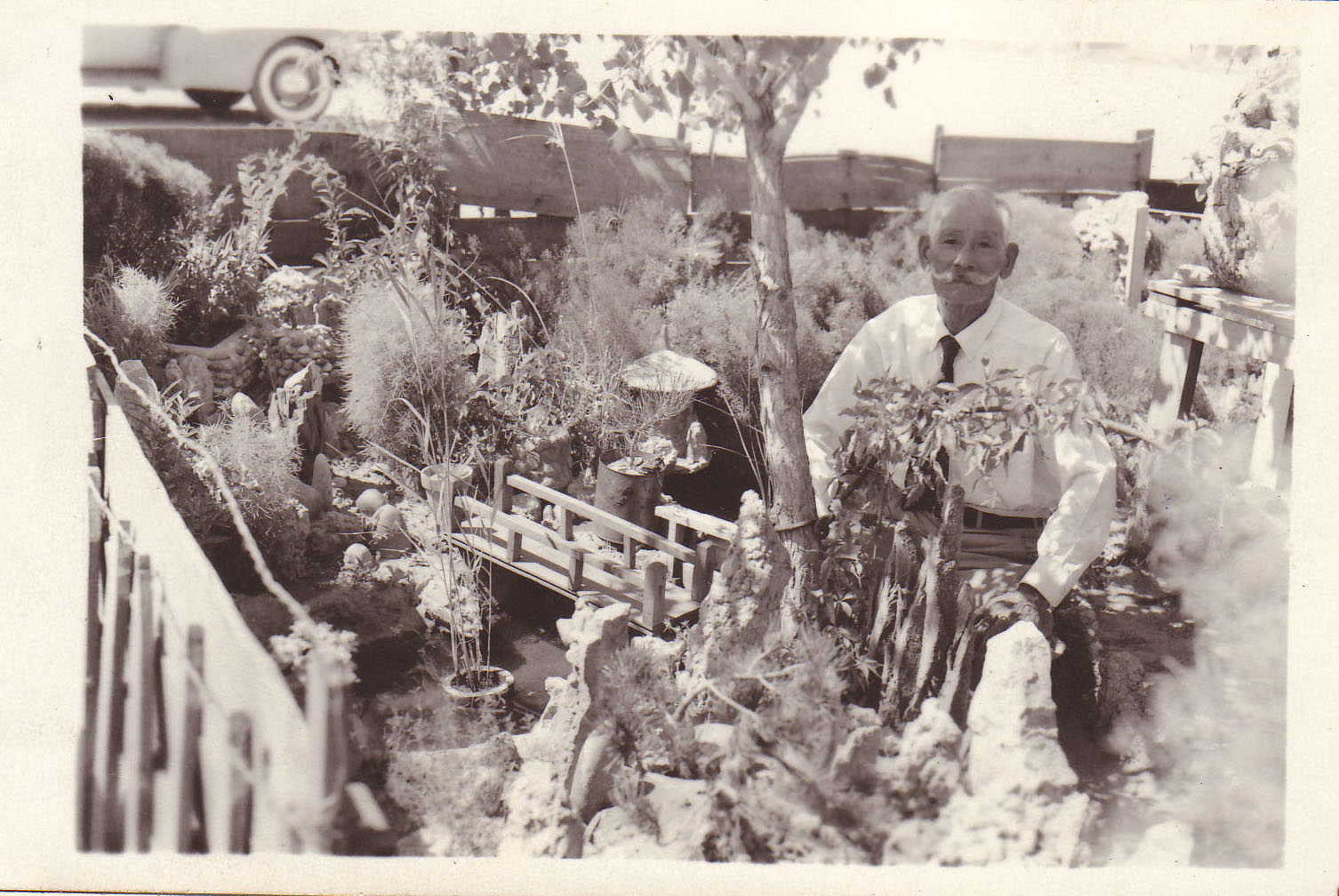 An internee and his ornamental garden at Camp Amache in Granada, Col. during World War II.