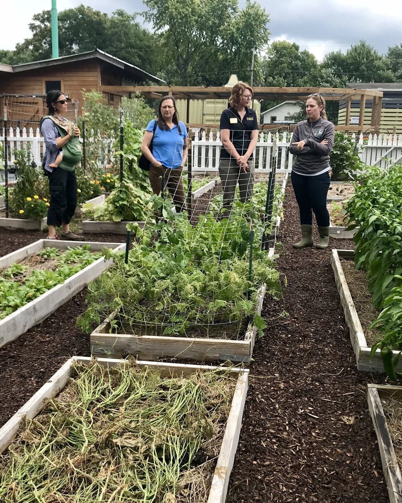 Remediated urban soil in community and school gardens. Paramount School of Excellence, Indianapolis, IN
