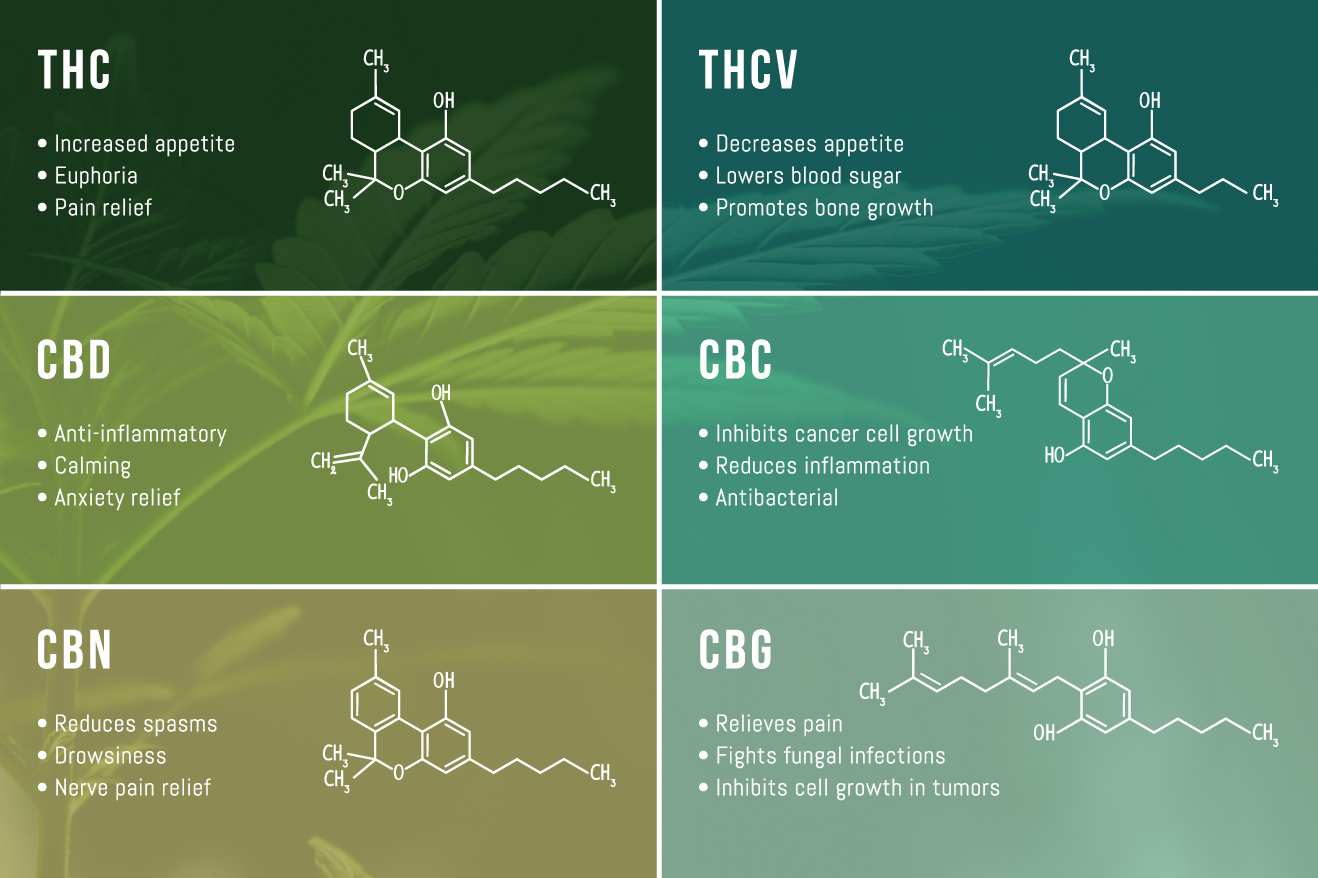 HONEY-FORMS-Infographic-CANNABINOIDS-WEBSITE-V3.jpg
