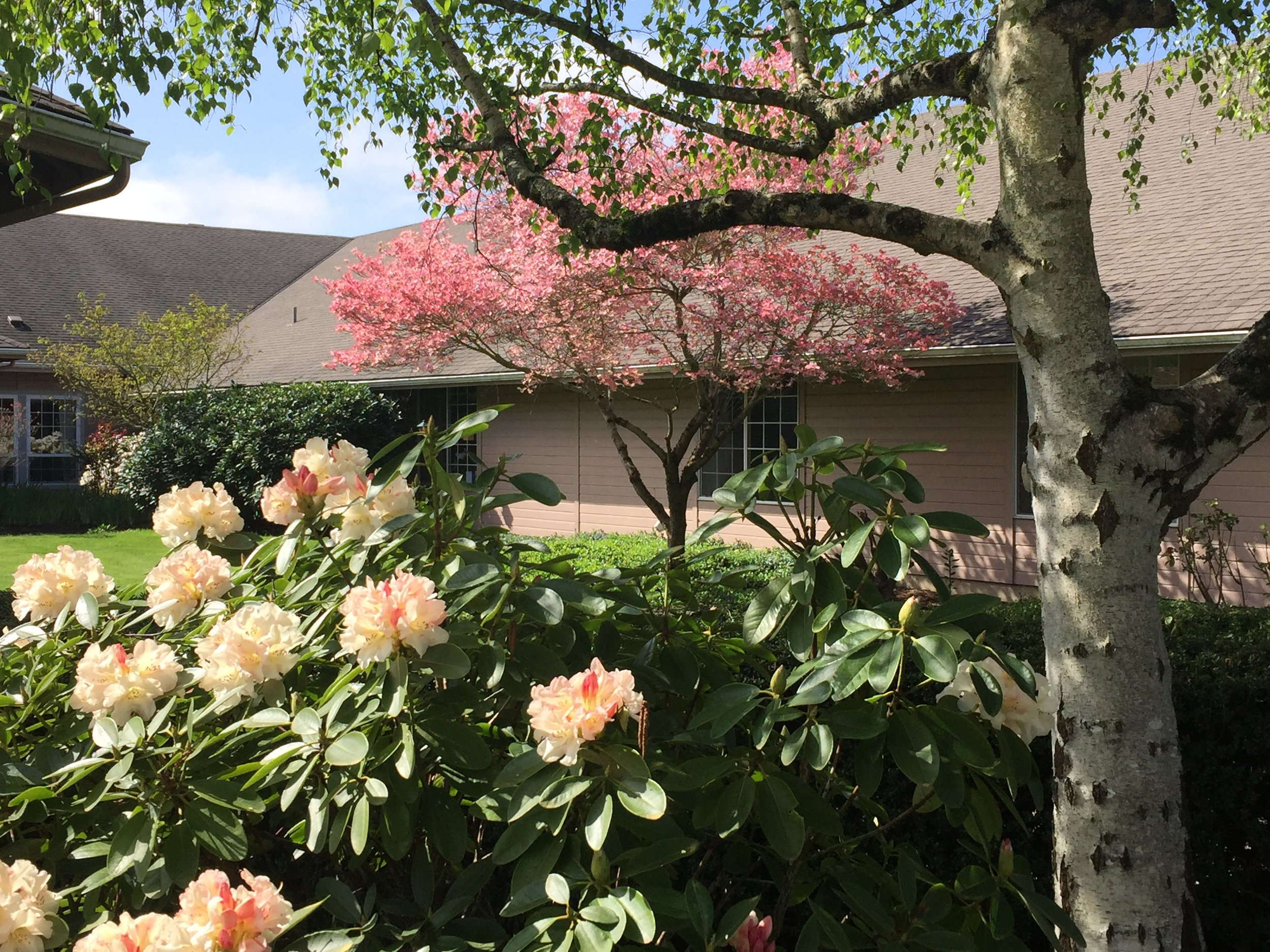 Tierra - Spring Tree and Rhodie Pic.jpg