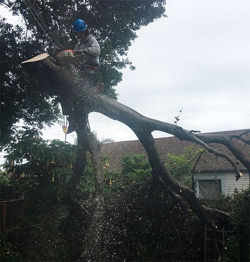 man-on-big-branch-cutting-osm.jpg
