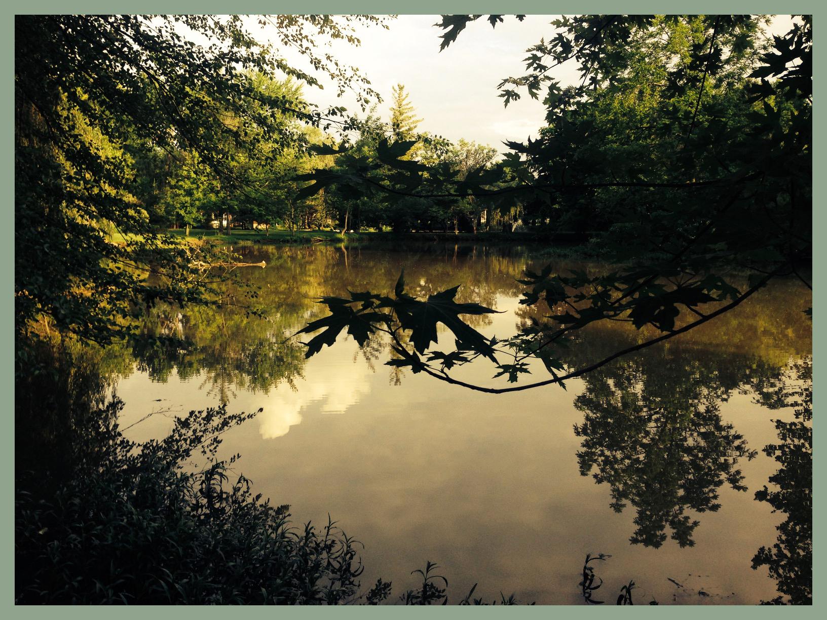 trees pond.jpg