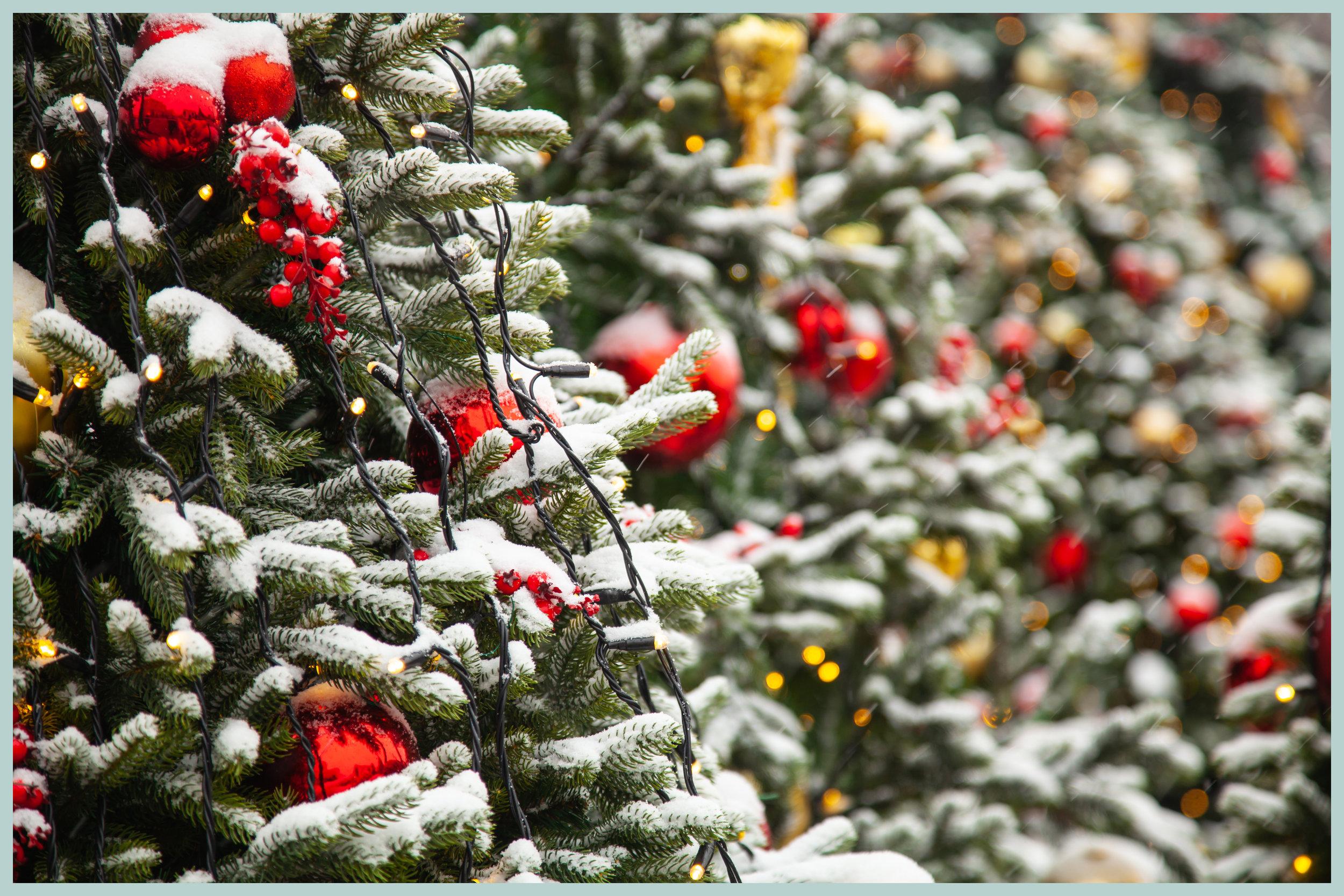 touch pine.jpg