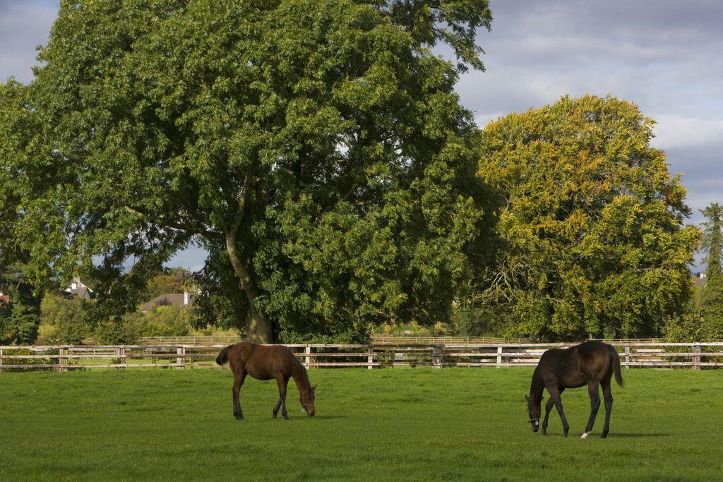 Irish National Stud & Japanese Gardens -    0 0 1 51 296 McKinney Shaw Travel LLC 2 1 346 14.0           Normal 0     false false false  EN-US JA X-NONE                                                                                                                                                                                                /* Style Definitions */ table.MsoNormalTable {mso-style-name: