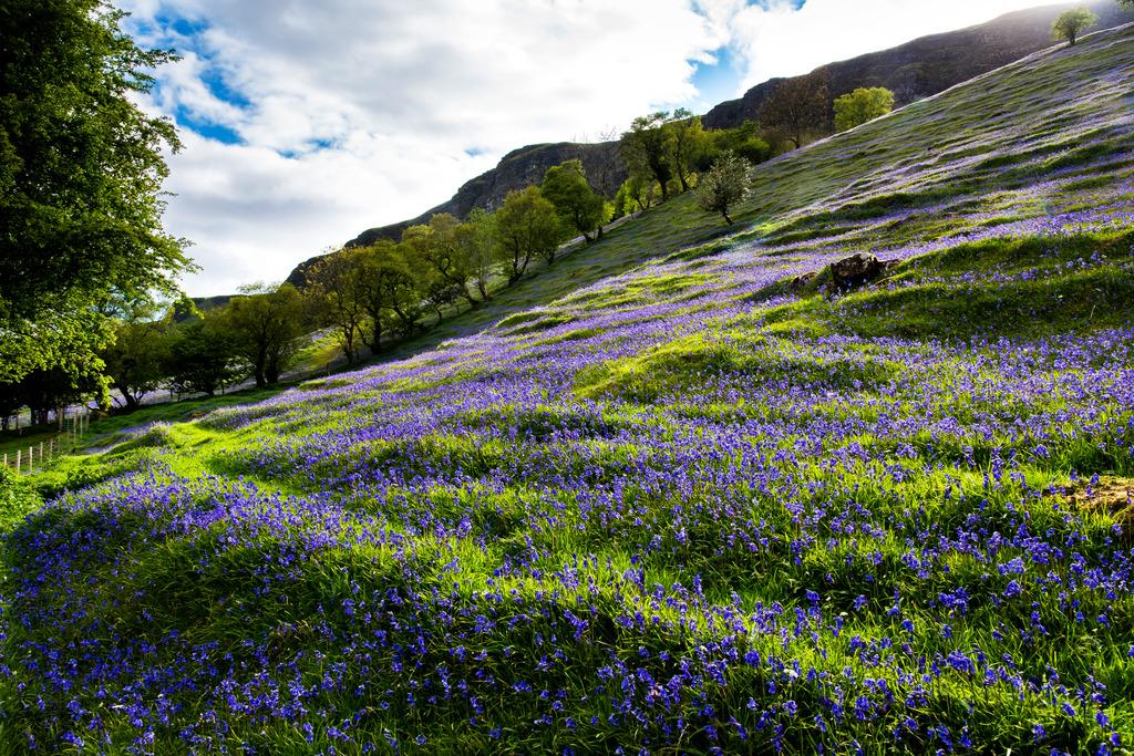 GlensAntrim_BlueBells.jpg
