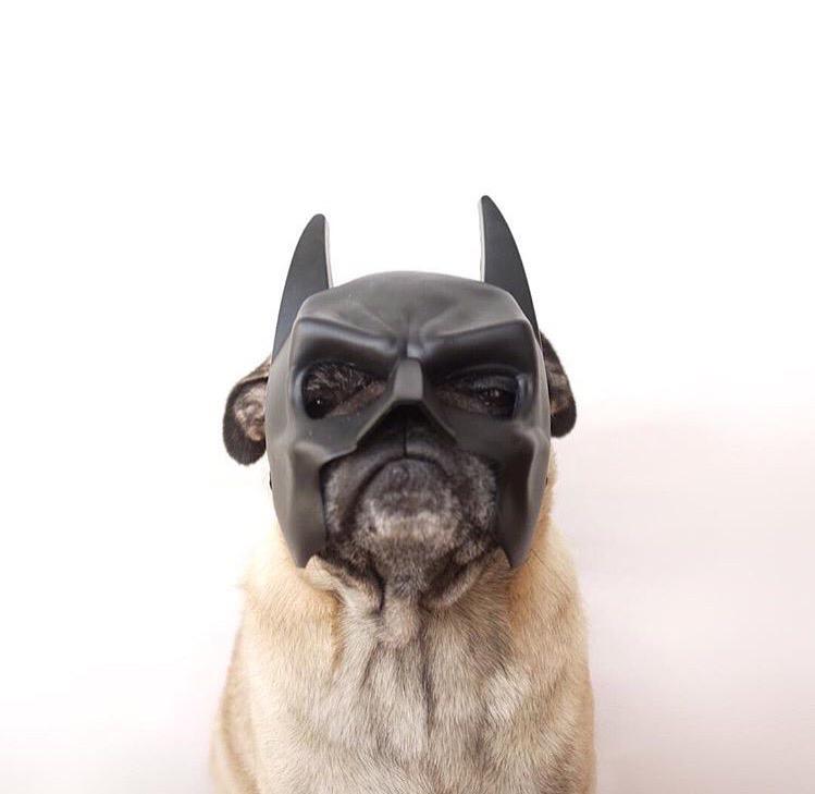 batman pug