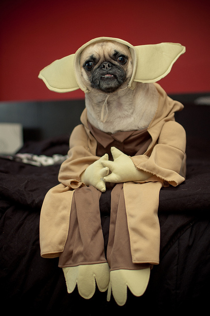 pug yoda costume