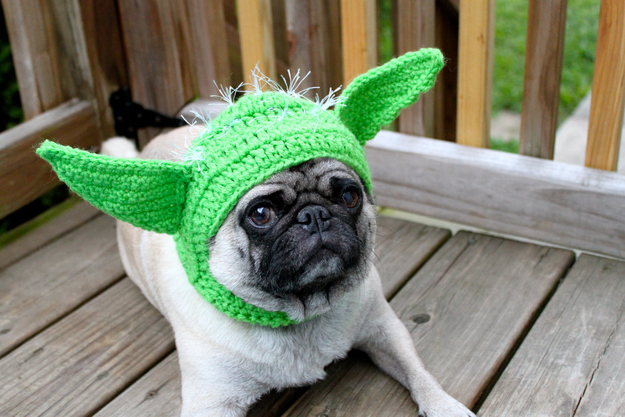 pug dressed as yoda