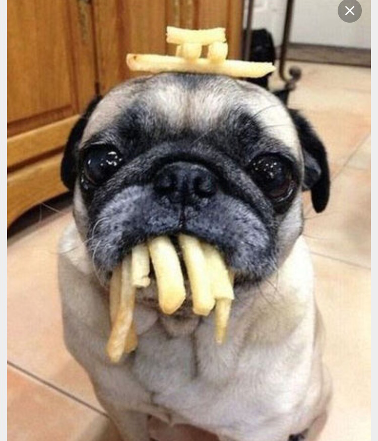 french fry pug