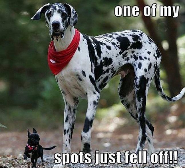 great-dane-meme-pup-dog.jpg