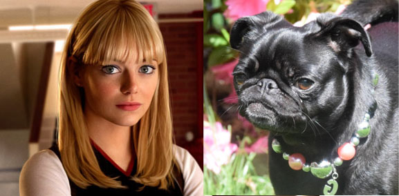 Gwen stacy Spiderman pug