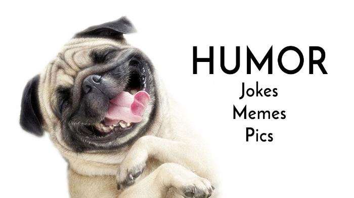 funny pug humor
