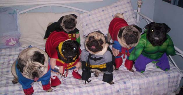 DC / Marvel Pug CrossOver!