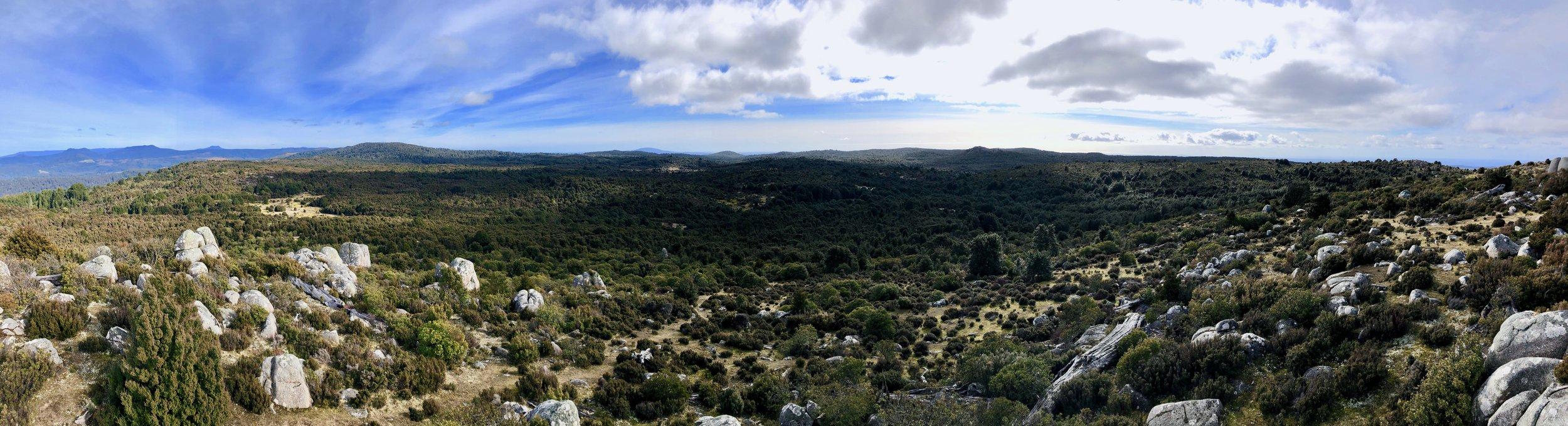 Beloved Tassie - Blue Tier Reserve, Tasmania