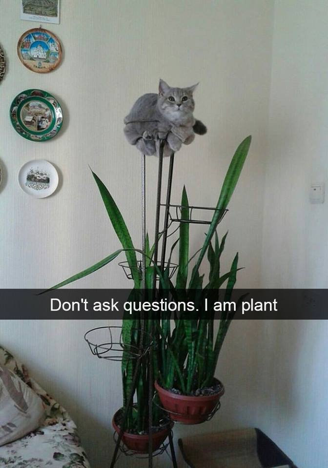 If you look closely you can tell that one of the plants is actually a cat!