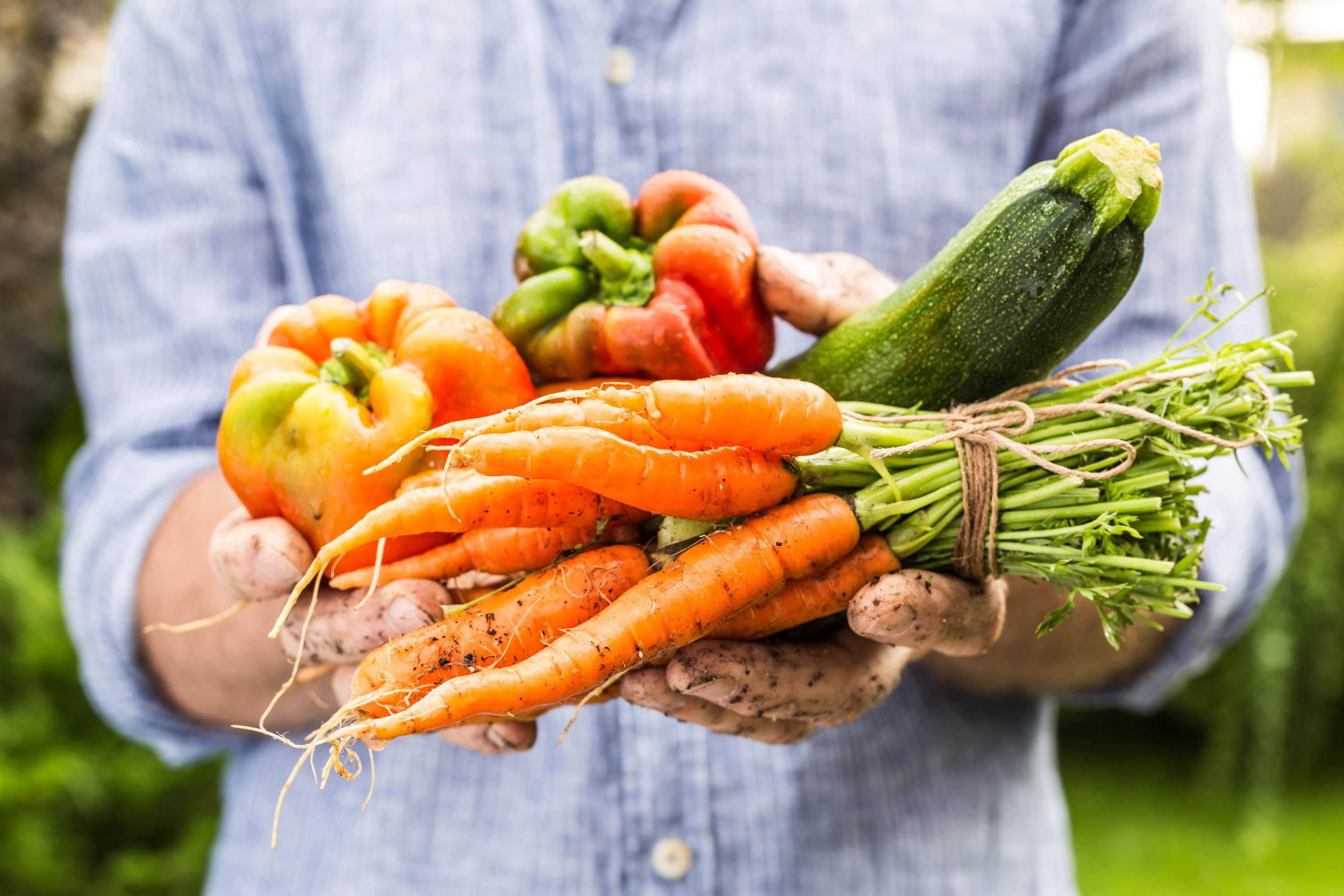 Gluten-Free Zucchini Pasta Primavera Recipe