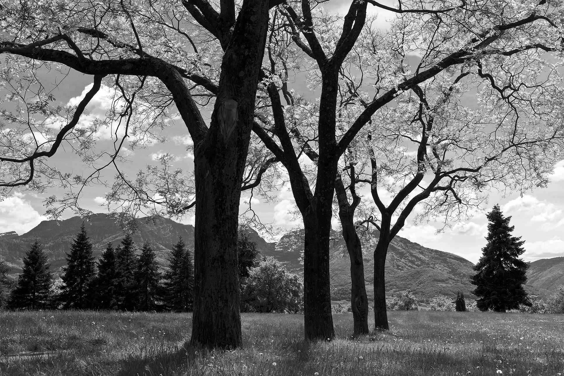 parc-Piot-Chambéry-mai-2012.jpg