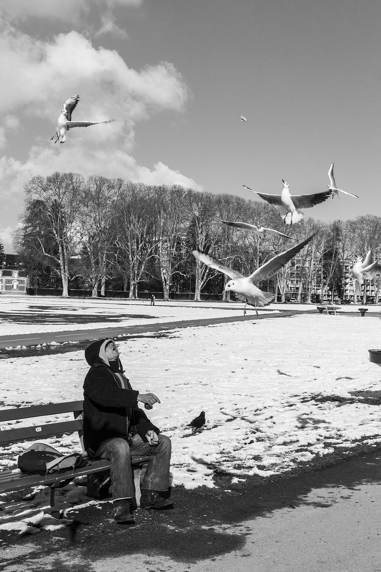 mouettes-Annecy-février-2013.jpg