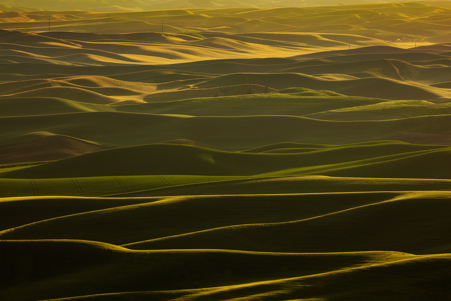 View from Steptoe Butte as the low angle light does its magic.