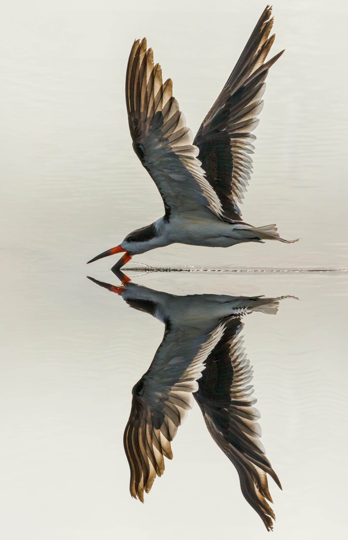 Florida Birds Gallery