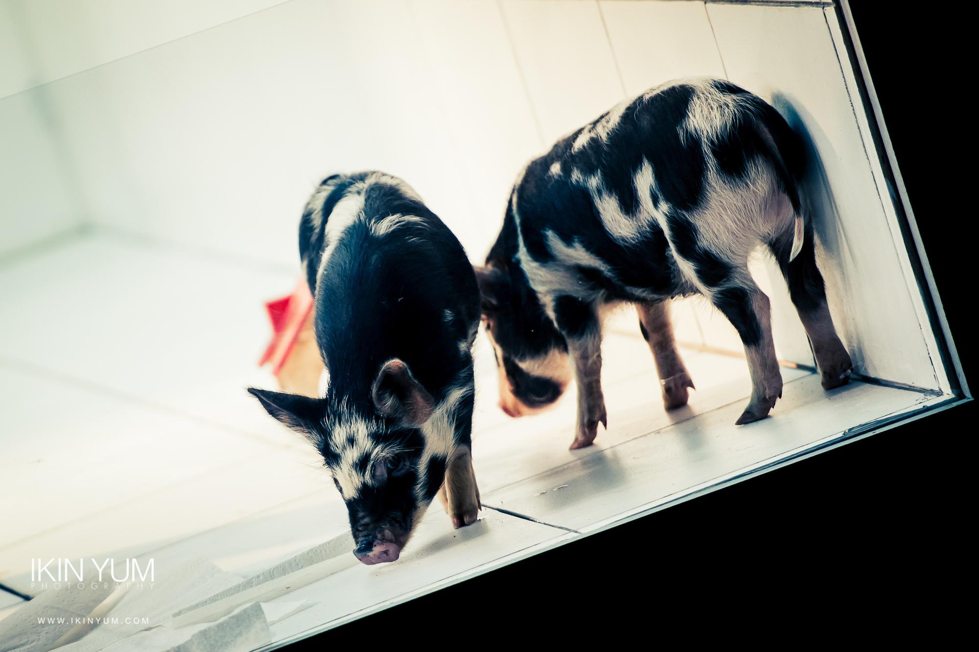 Goya - Gate theatre - Ikin Yum Photography-048.jpg