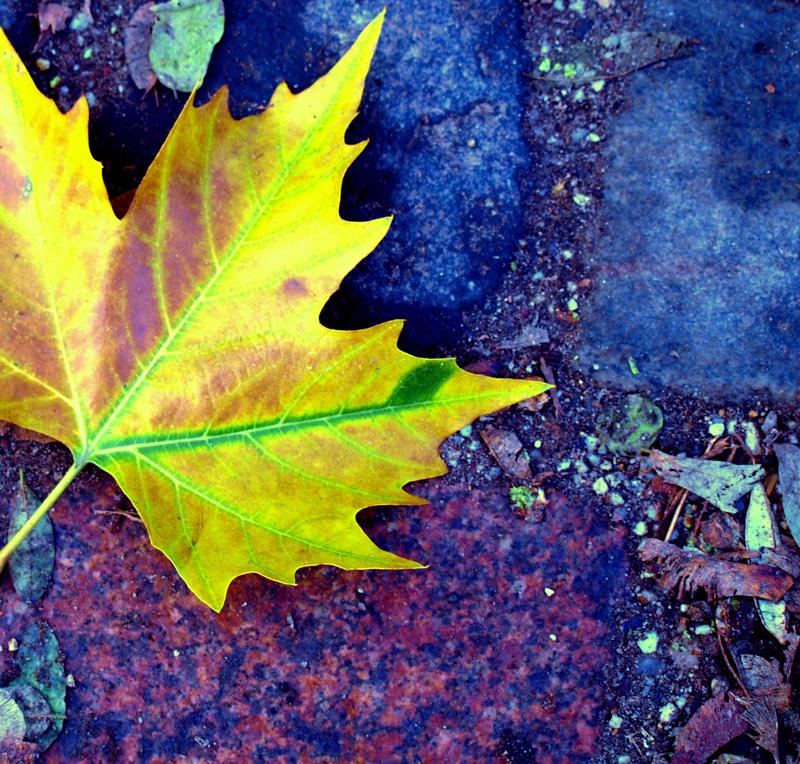 A leaf -