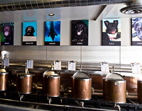 dog-photos-above-kettles-resize-480x375.jpg