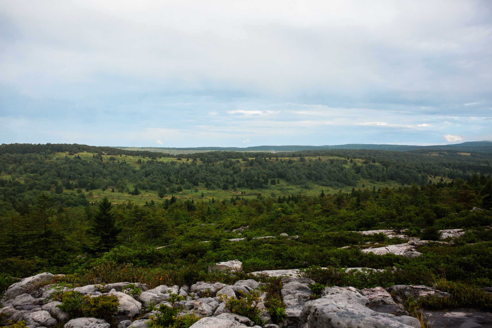 Hiking in Dolly Sods West Virginia, West Virginia adventure photographer, Dolly Sods adventures, rainy day adventures, rainy hike. The view just off path during a rainy Dolly Sods backpacking trip