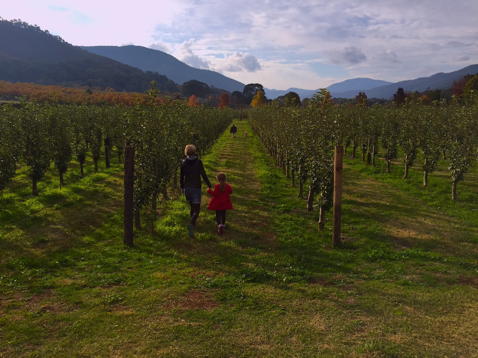Apple orchard walks - Wandilligong