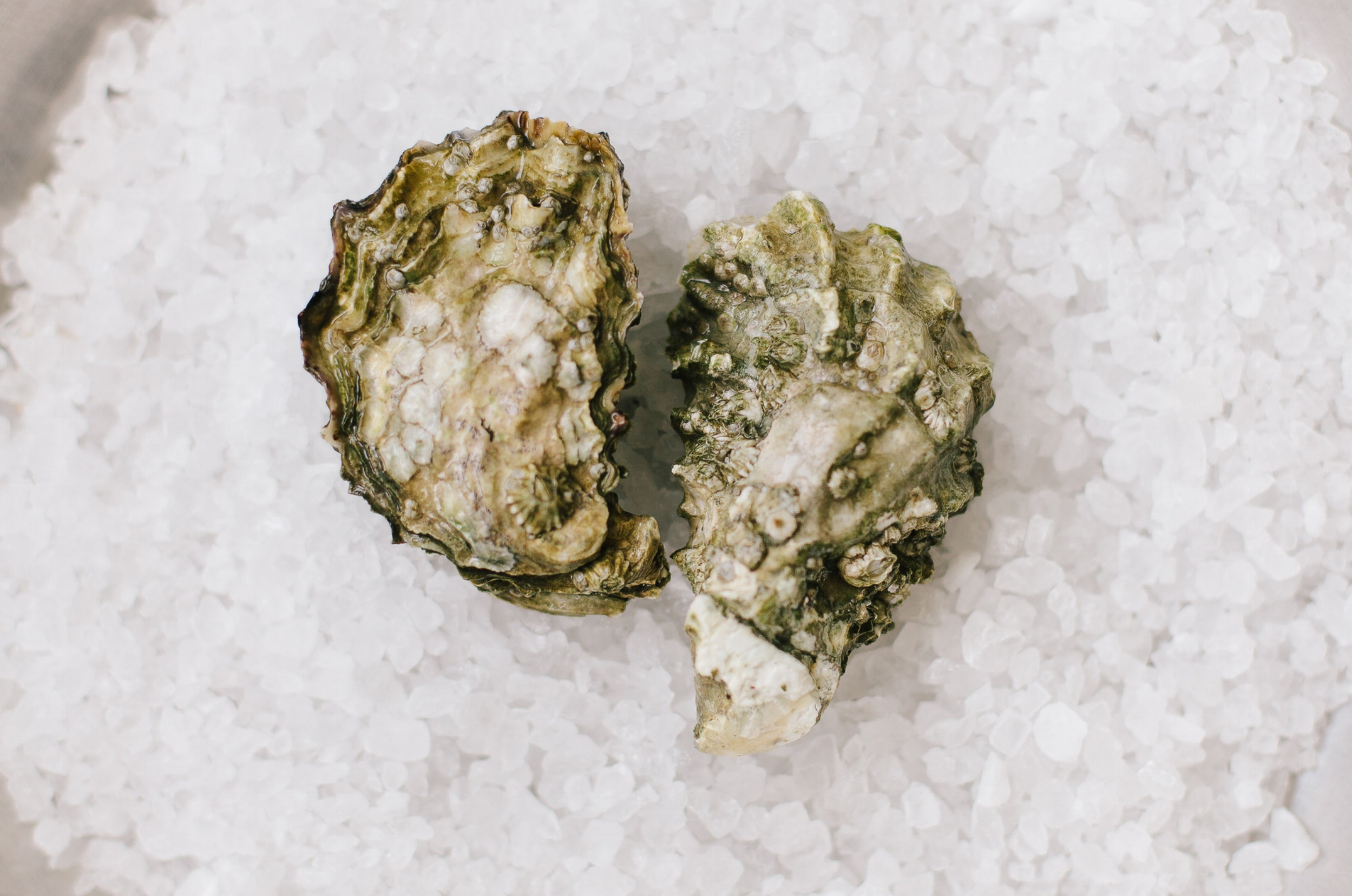 Fanny Bay - Origin: British ColumbiaFlavor Profile: Sweet and salty, slight metallic taste, with a distinct cucumber finish.