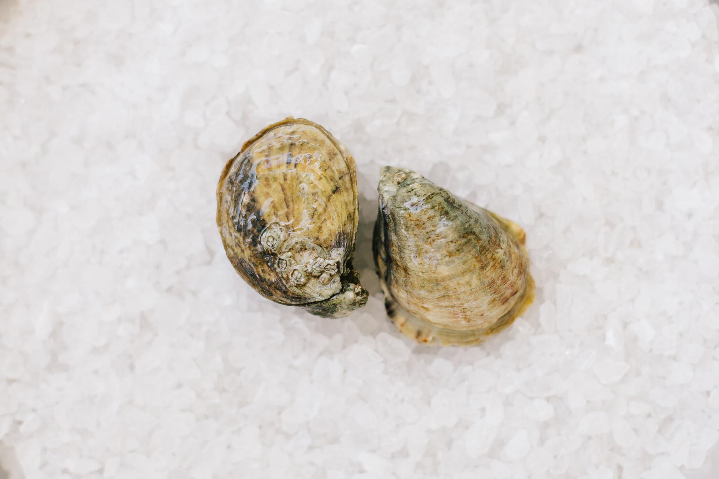 Shigoku - Origin:Willapa Bay, WashingtonFlavor Profile:Deep cup, firm flesh, medium brininess, and clean taste.